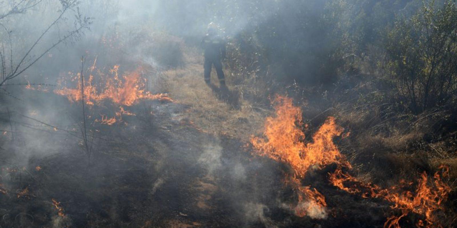 Chile necesita contar con 8 millones de hectáreas de bosque para contrarrestar su huella de CO2. Si bien, contamos actualmente con 17 millones de hectáreas, éstas no están ubicadas de manera equilibrada en relación a las zonas que mayor cantidad de CO2 generan. Foto:Agencia Uno. Imagen Por: