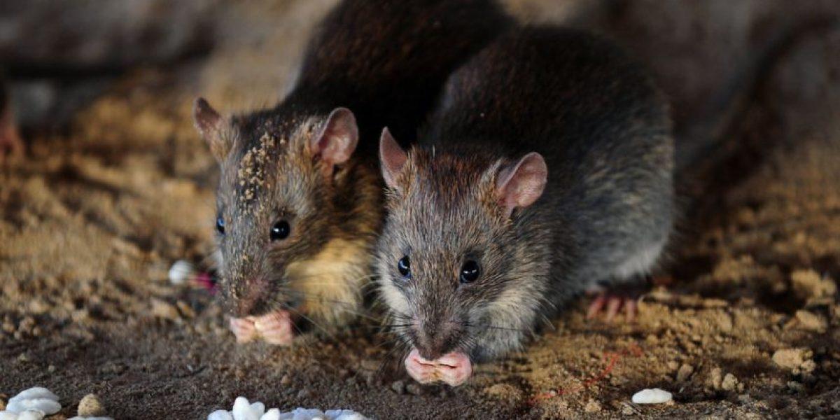 Animalistas reunen más de 17 mil firmas para detener el