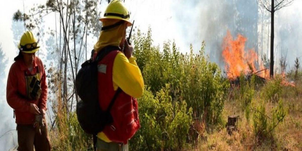 Onemi reporta 16 incendios forestales activos en el país