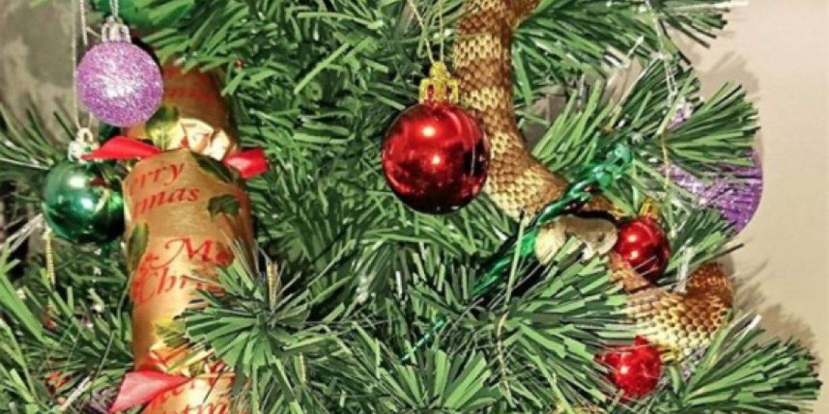 Mujer encuentra serpiente venenosa de un metro enroscada en su árbol de Navidad