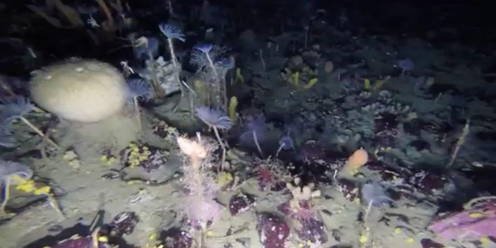 Los científicos intentan comprender mejor el impacto de la acidificación del océano Austral sobre las especies que viven sobre el nivel oceánico, bajo el efecto de las crecientes emisiones de dióxido de carbono. Foto:Reproducción @AusAntartic. Imagen Por: