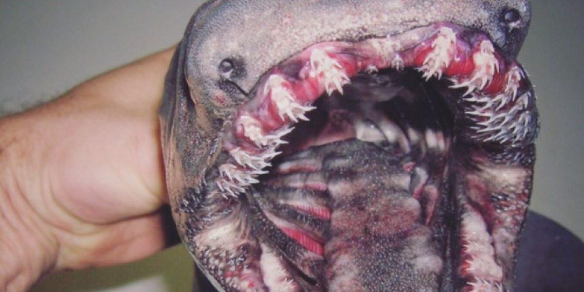 Los sorprendentes monstruos marinos que pescador ruso capturó en sus redes
