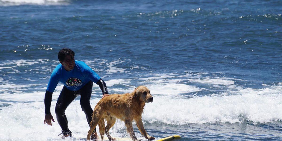 La increíble historia de Bubba, el perro surfista que la rompe en Pichilemu