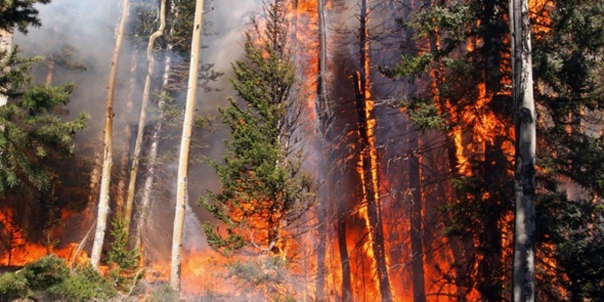 Cambio climático: Incendios forestales su gran efecto