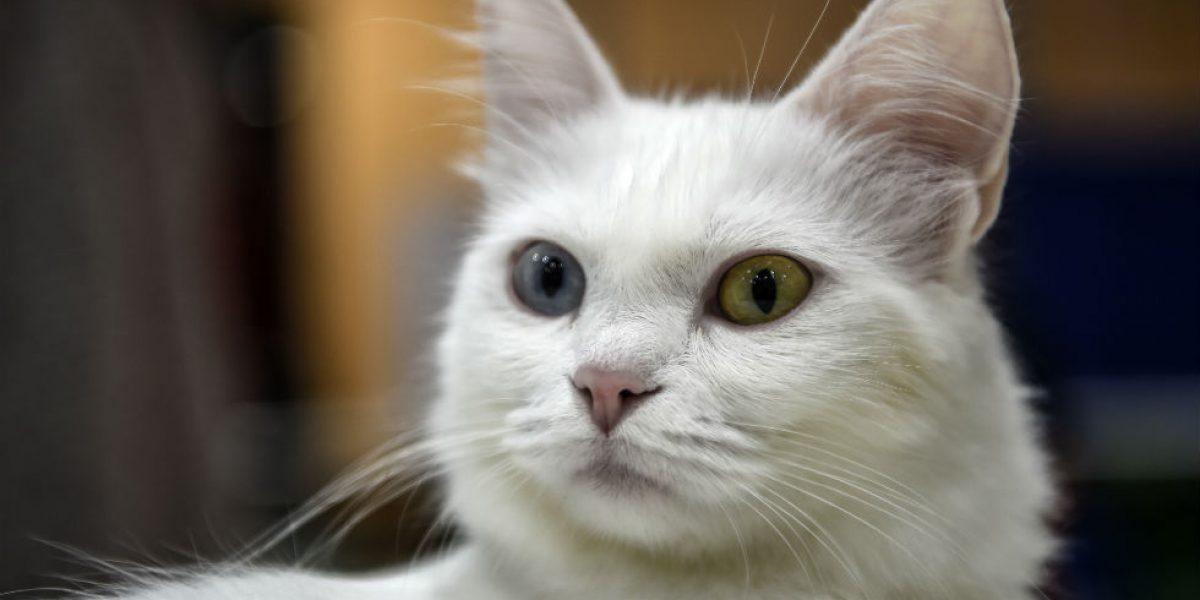 Polémica por libro escolar que sugiere asfixiar a los gatos para hacer experimentos