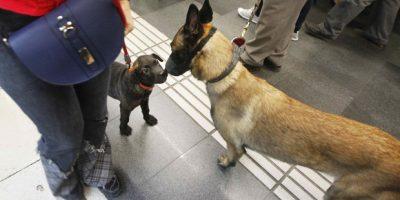 A partir de mañana las mascotas podrán tomar el subte — ESTAMOS TODOS
