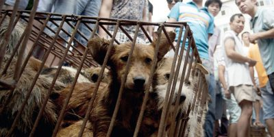 Taiwán prohíbe el consumo de carne de perro y de gato