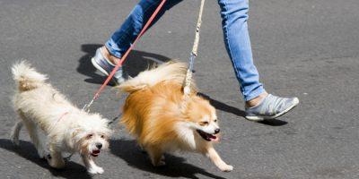 Esta aplicación encuentra a la persona que puede pasear a tu mascota
