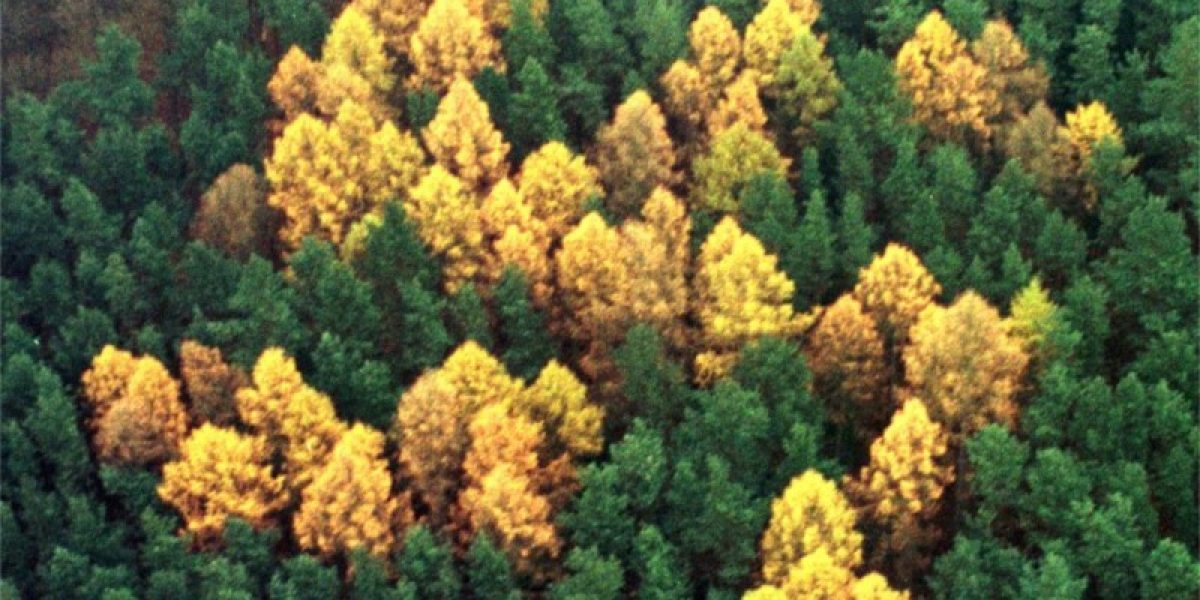 El misterio de la esvástica del bosque: el único icono nazi que ha sobrevivido hasta la fecha