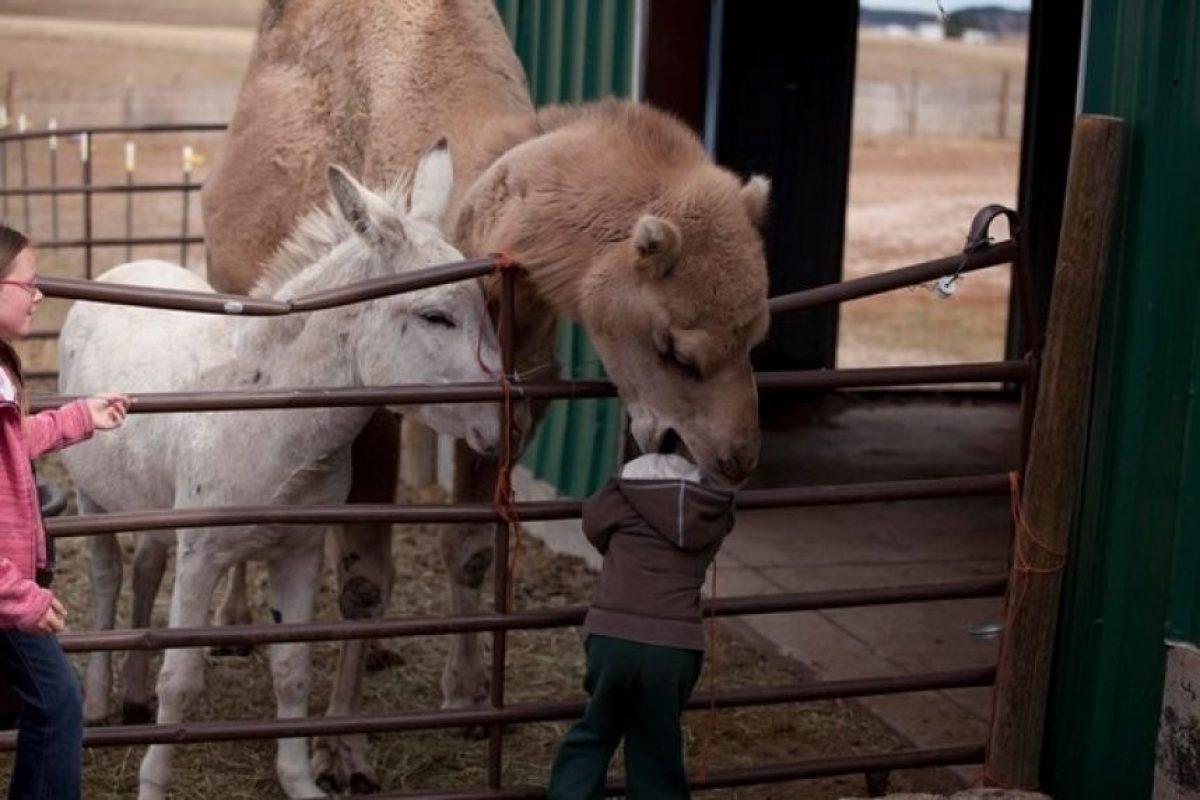 A este niño… uno nunca sabe.. depronto necesite ayuda para su venganza Foto:Buzzfeed.com