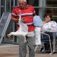 A este señor que acaba de sufrir un comico robo Foto:Buzzfeed.com