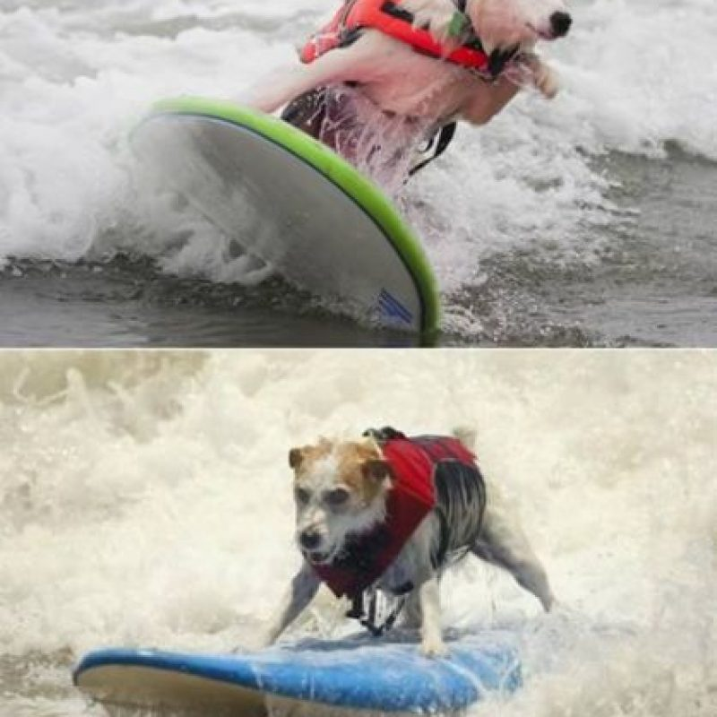 Perros surfistas Foto:oddee.com