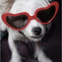 Foto:animalswithsunglasses.com