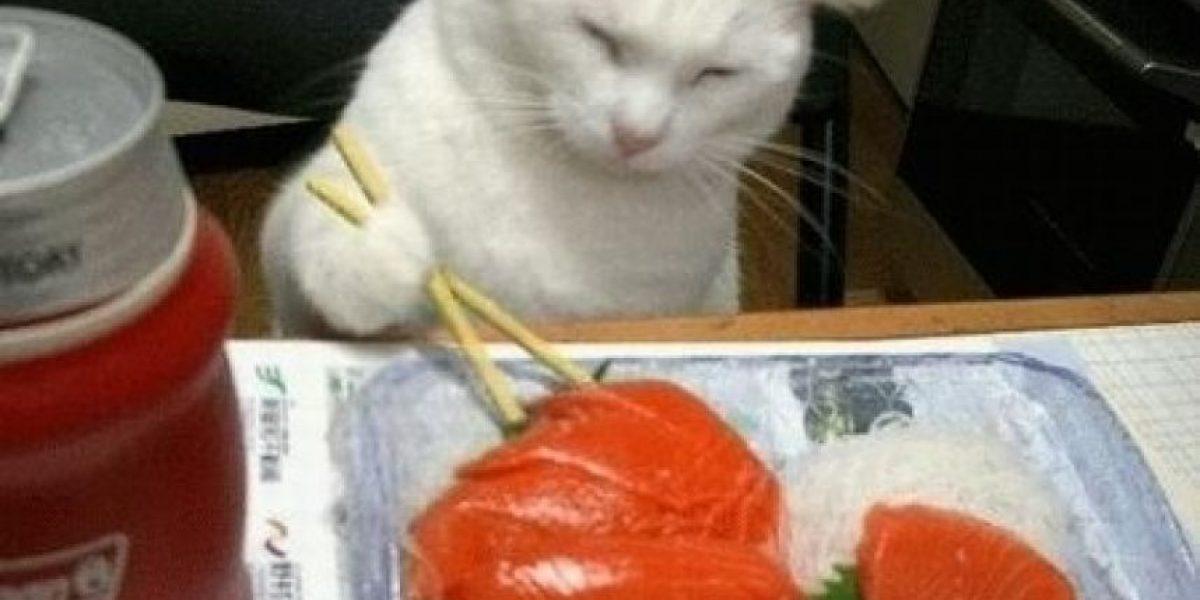 Gaticos amantes del sushi