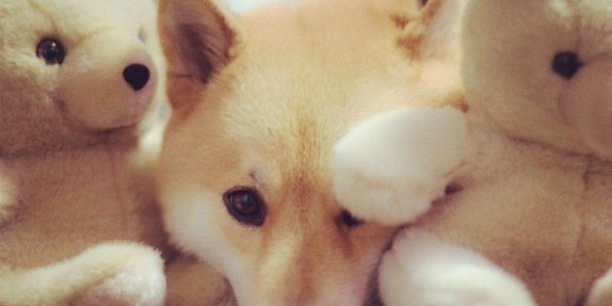 Conozca al perro más famoso de Instagram