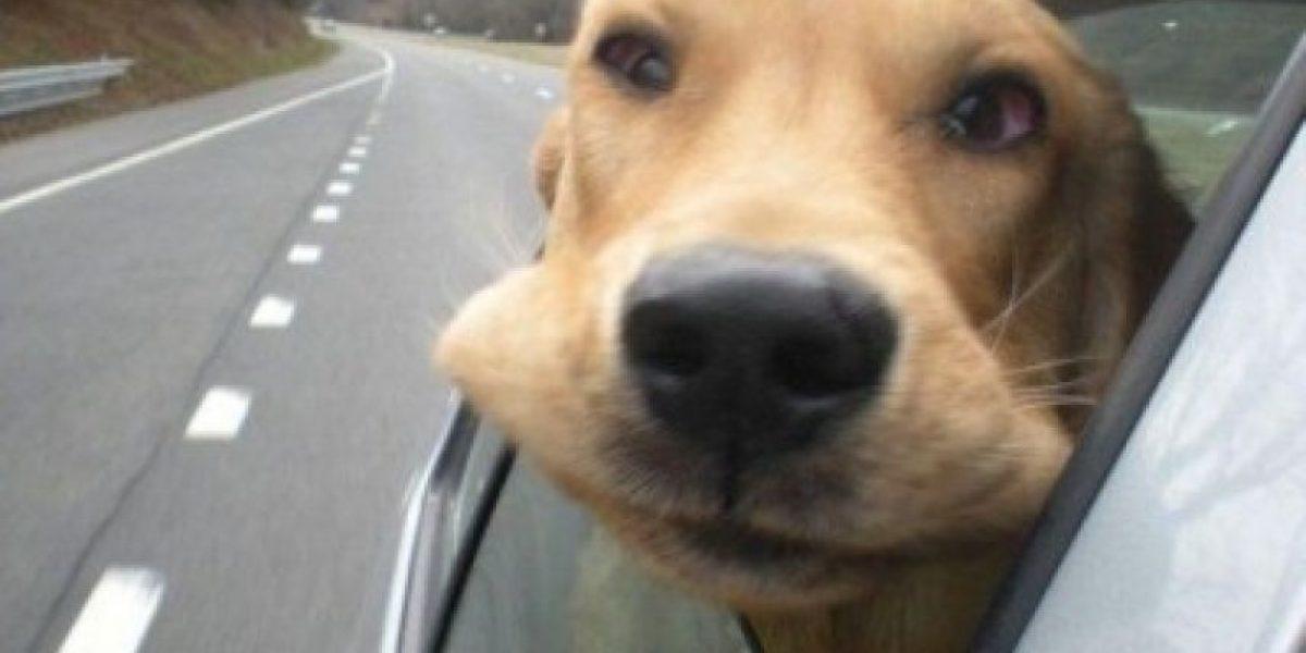 20 animales adorables que aman asomarse por la ventana