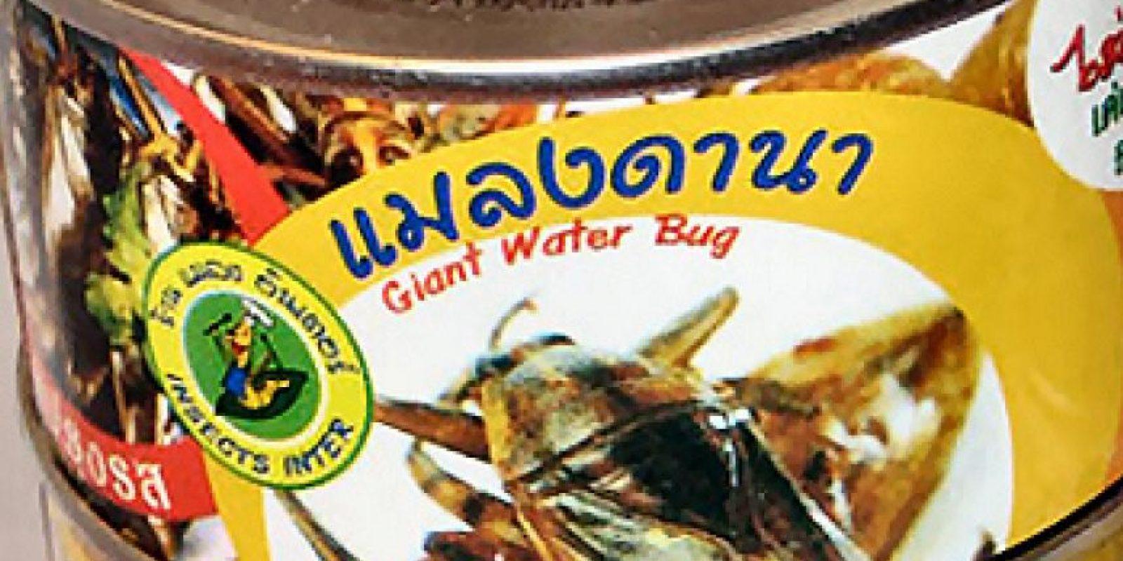 Cucarachas – Taiwan Foto:jacovox.com