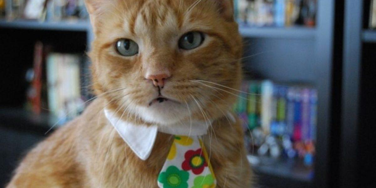 10 gatos con corbata que celebran el Día del padre