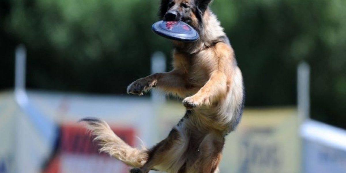 Fotos increíbles de perros atrapando un