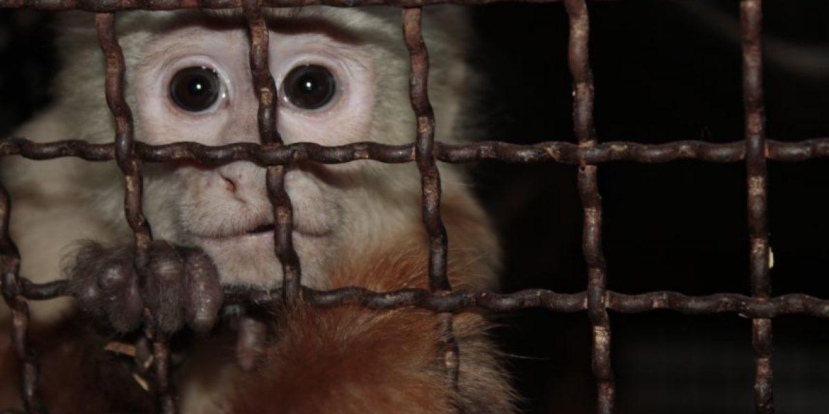 Frustrado regreso de cientos de animales a su hábitat natural