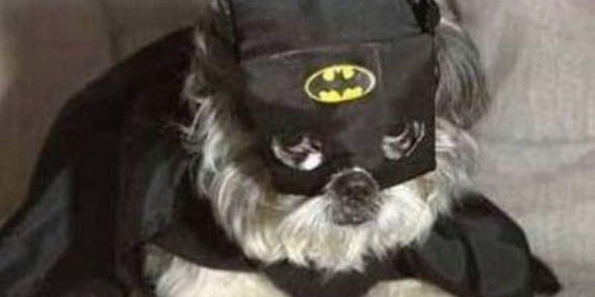Los disfraces de Batman más graciosos