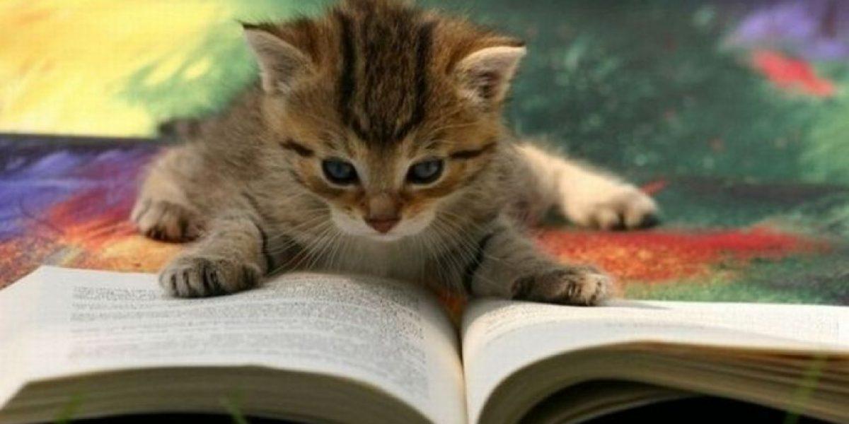 [Galería] 18 gatos dedicados a la lectura