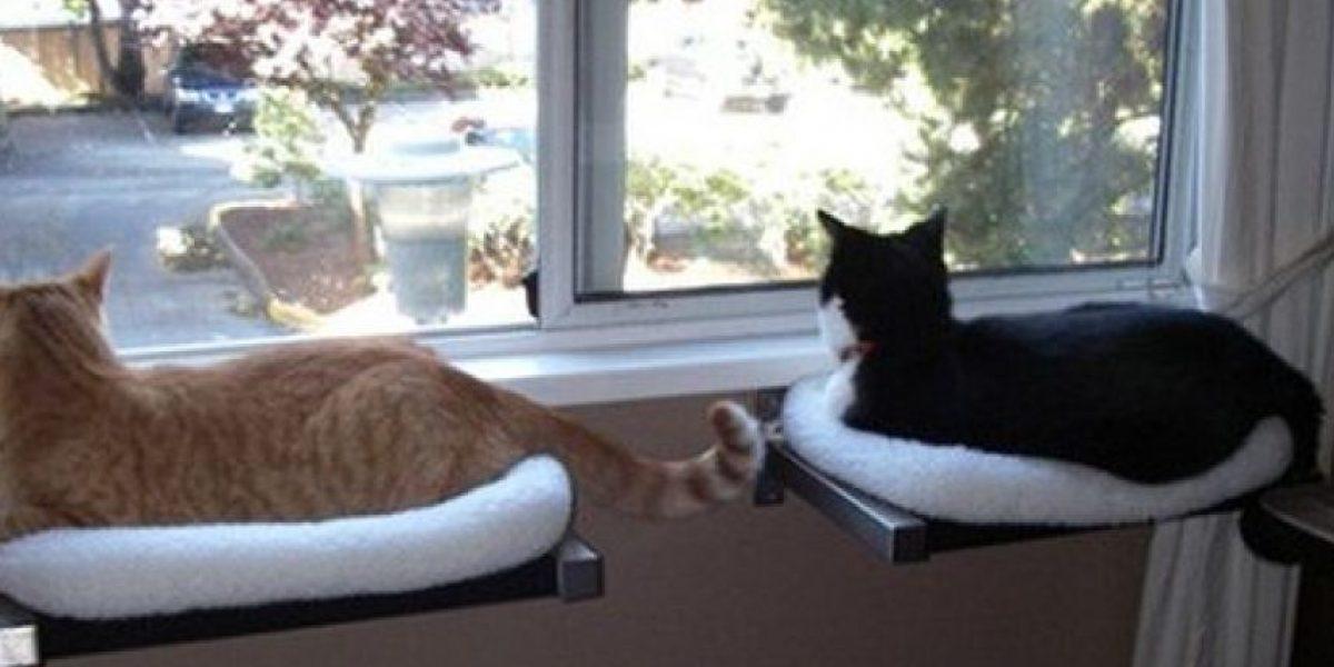 [Galería] Los mejores muebles para su gato