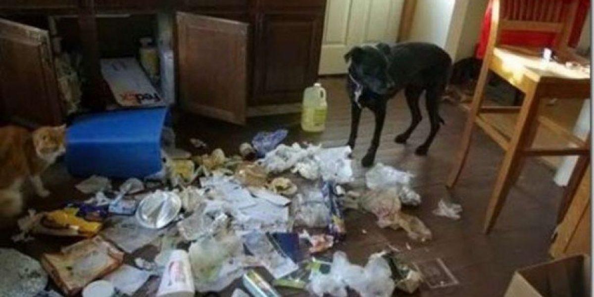 [Galería] Desastres de una mascota sola en casa