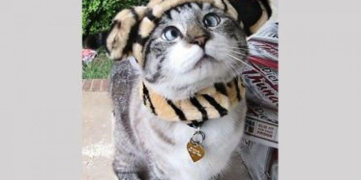 Este gatito que tiene 5 mil seguidores en Facebook