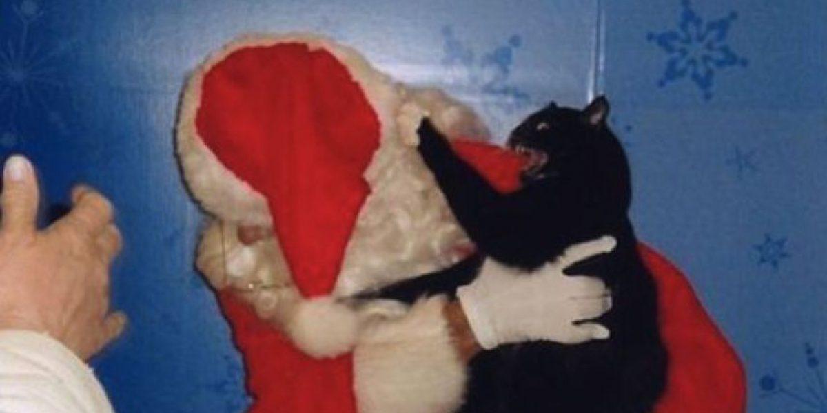 Gatos que odian la Navidad
