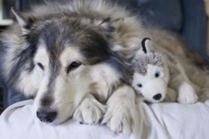Foto:smilepost.ru