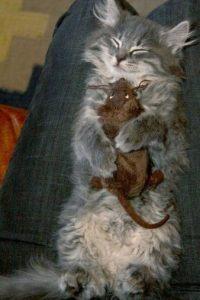 Foto:animalworld.com.ua