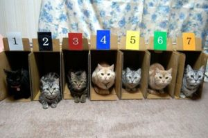 Foto:laughingsquid.com