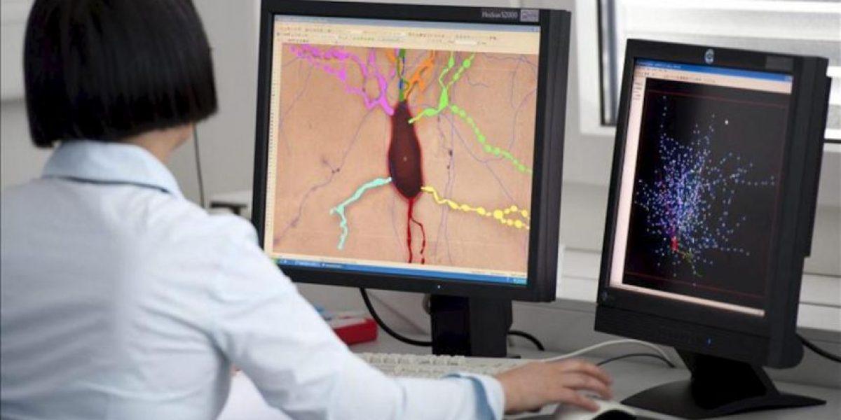 La CE concede 1.000 millones euros a proyectos sobre el cerebro y el grafeno