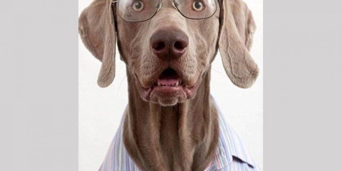 Fotos: Los perros mejor vestidos