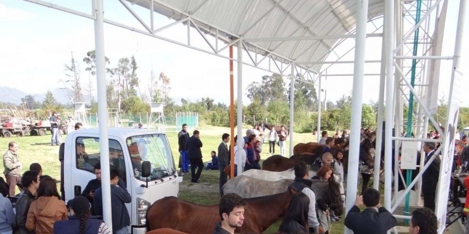 El objetivo de esta etapa consiste en la recepción, valoración, tratamiento, alojamiento y entrega a posibles adoptantes de los caballos. Foto:Diego Hernán Pérez/PUBLIMETRO