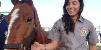 Pitufo, un caballo de siete años ahora estará en cuarentena. Érica Pedroza, estudiante de Medicina Veterinaria de la UDCA estará en su cuidado. Foto:Diego Hernán Pérez/PUBLIMETRO