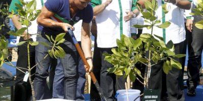 El delantero portugués del Real Madrid Cristiano Ronaldo planta manglares en Nusadua en Bali (Indonesia) hoy, miércoles 26 de junio de 2013. EFE
