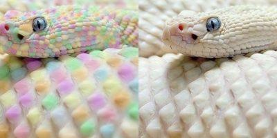 La serpiente arcoiris Foto:Buzzfeed.com