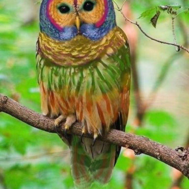 El buho multicolor Foto:Buzzfeed.com