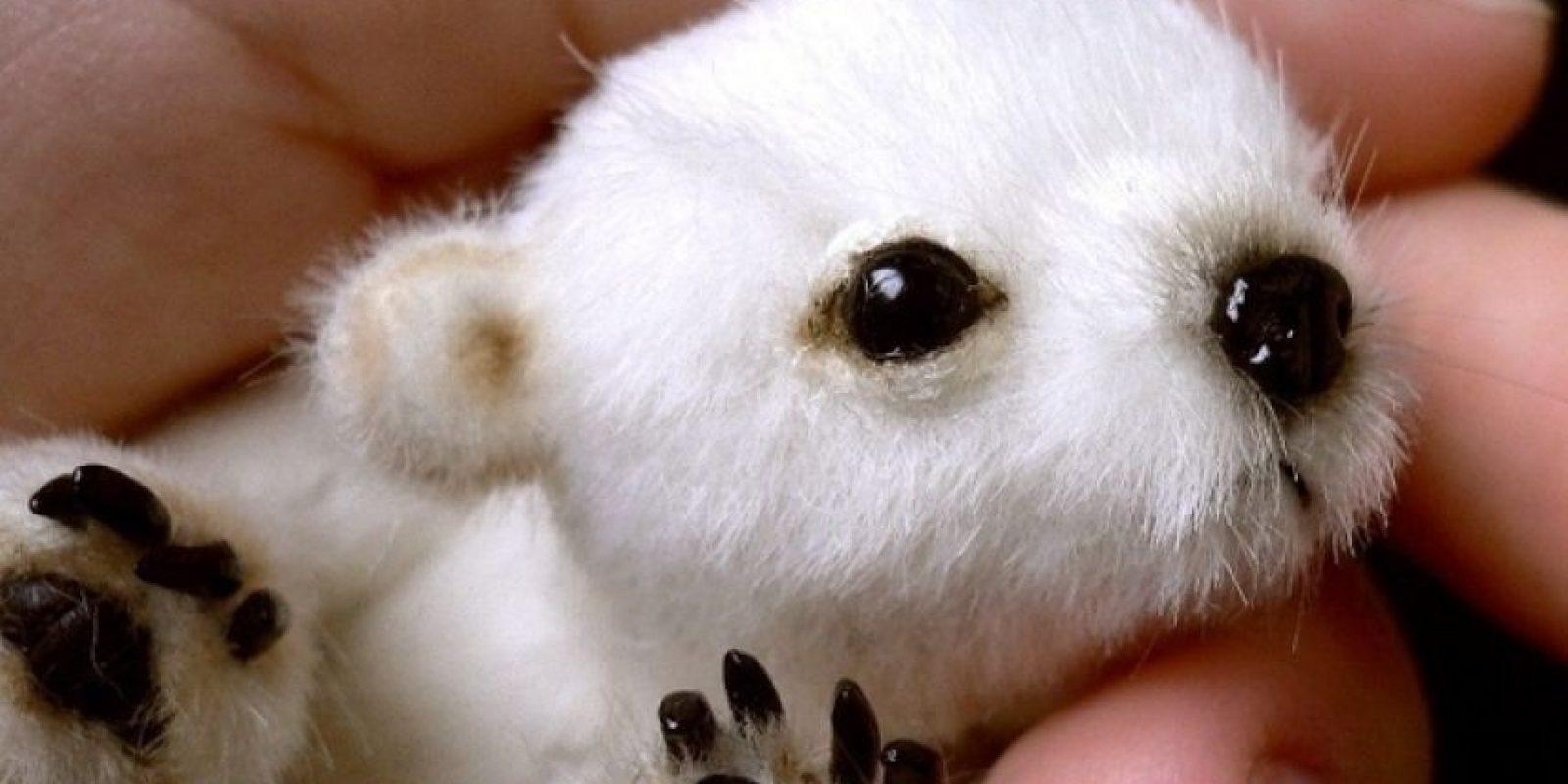 El oso polar bebé Foto:Buzzfeed.com