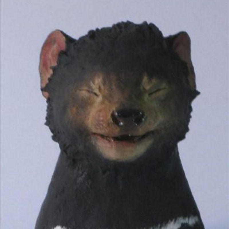Fotografía facilitada por el artista Javier Aguilera Vela de una de las obras de su exposición en la que muestra varias esculturas de diablos de Tasmania. EFE