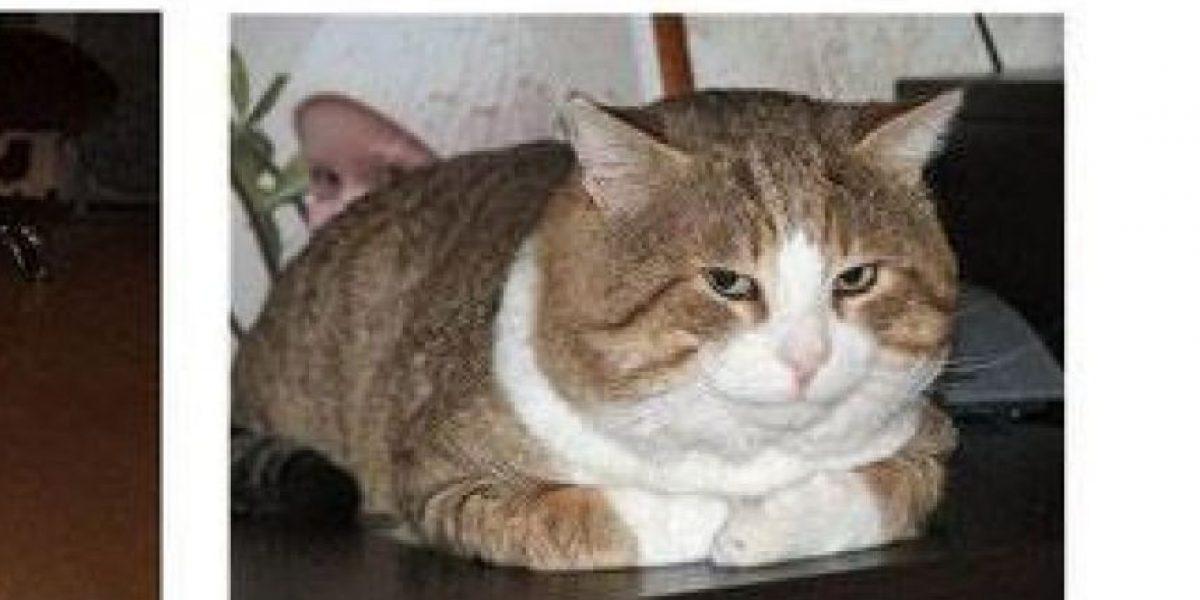 Foto: Gatos abandonados antes y después