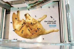 Desparasitar los perros implica estar encima de ellos en Indonesia. Foto:adsofteworld.com