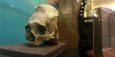 Detalle de trepanaciones craneanas (cráneos con agujeros) de la cultura prehispánica Paracas, que están siendo exhibidos en la sala más grande dedicada a esta cultura reabierta al público, en el Museo Nacional de Arqueología, Antropología e Historia de Lima (Perú). EFE