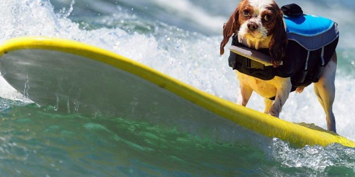 Fotos: A estos perros californianos no les quedan grandes las olas