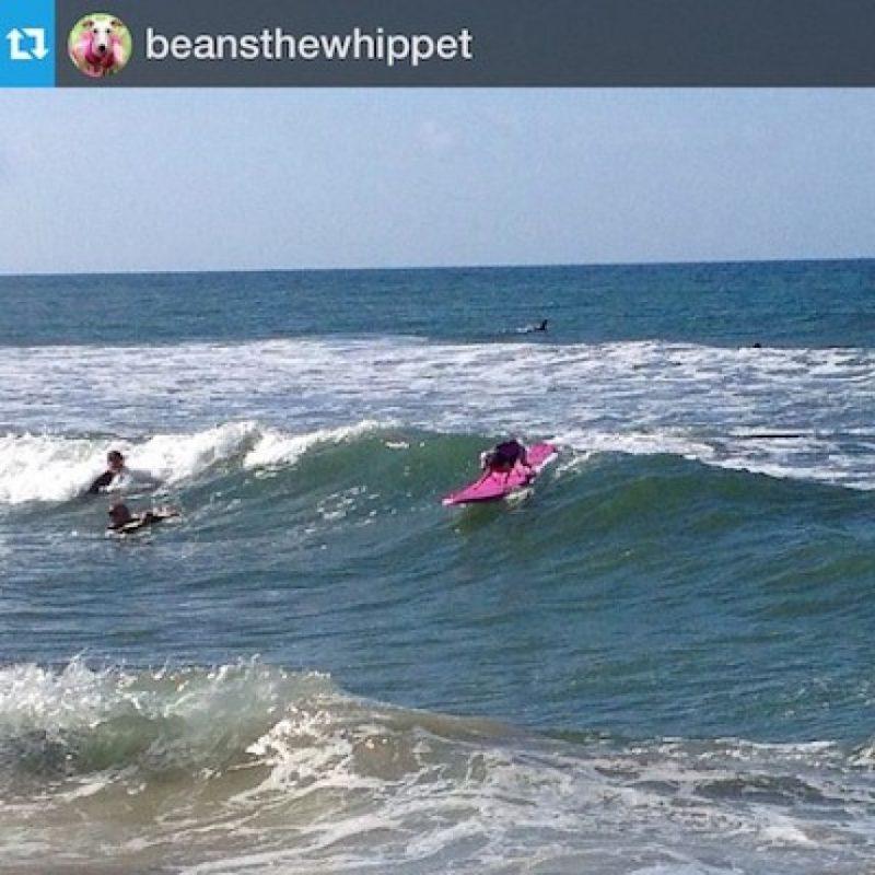 Foto:Vía Instagram #SurfcitySurfdog
