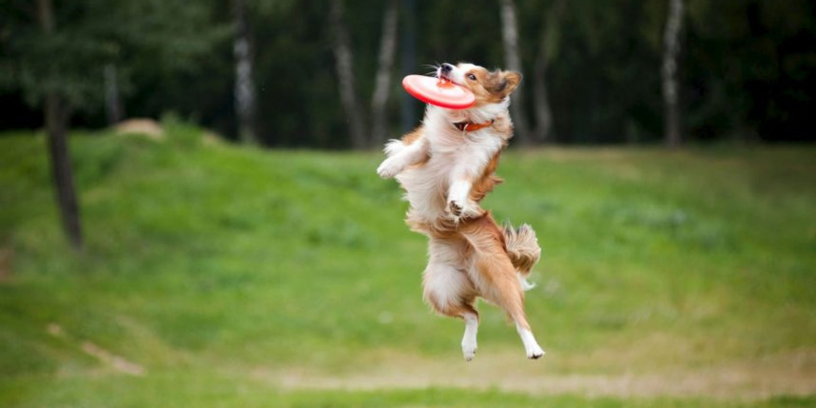 En Asia no ven a los perros como mascotas. Foto:Getty Images