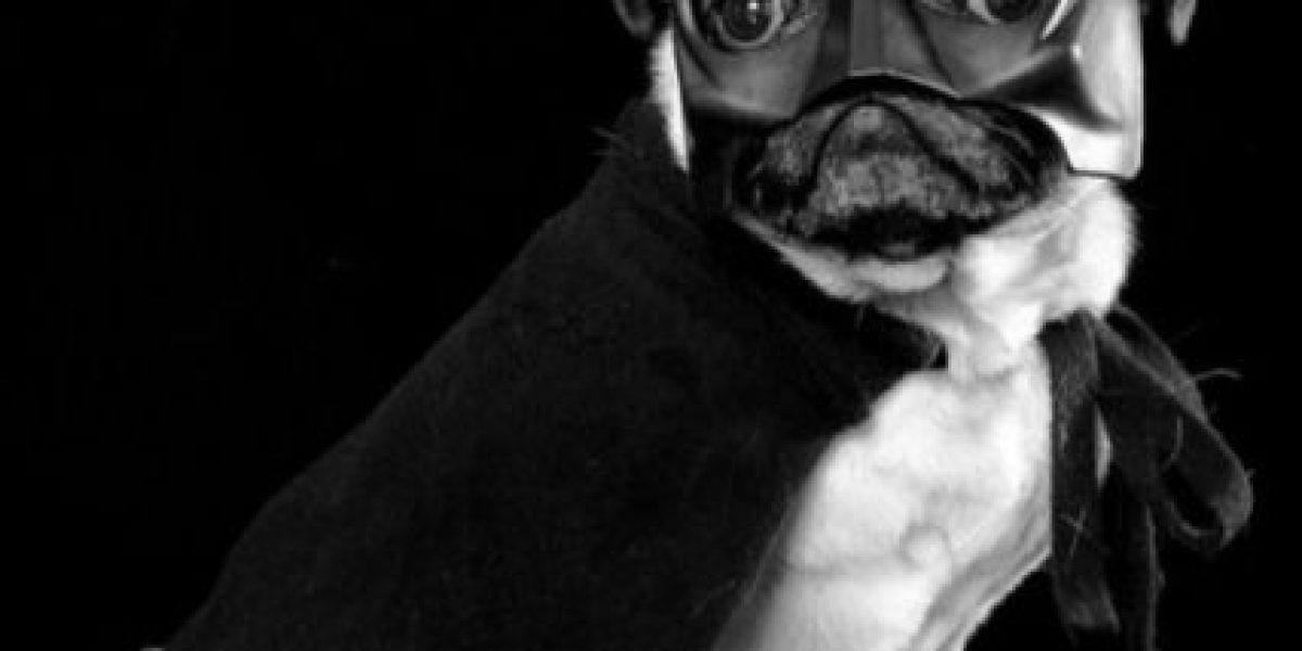 Galería: Los disfraces más increíbles para perros y gatos
