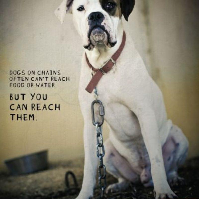 Por lo general, a las mascotas se les deja afuera de algún lugar en el que su presencia no es permitida. Foto:Getty Images